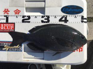太田尾さん   40cm